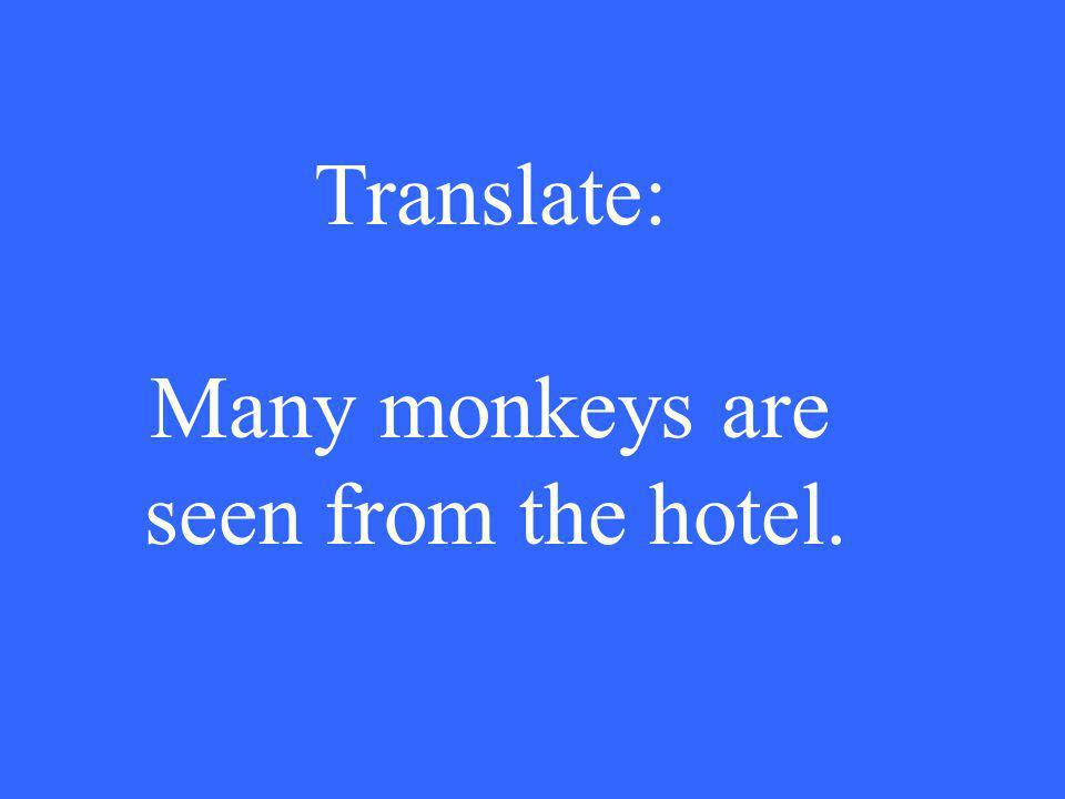 Translate: Many monkeys are seen from the hotel.