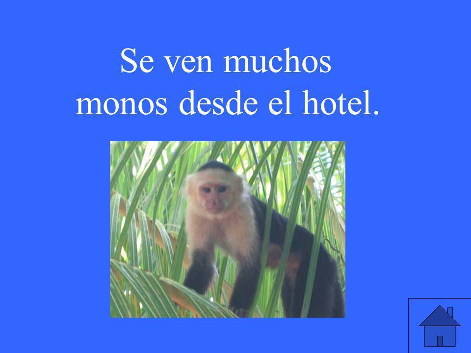 Se ven muchos monos desde el hotel.