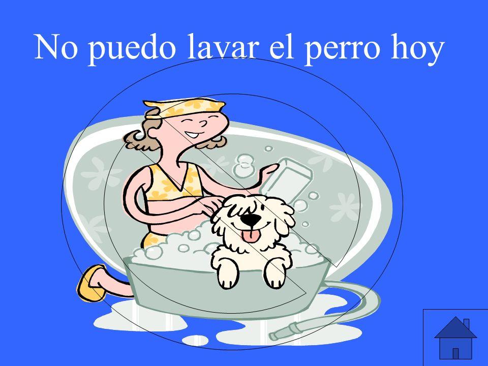 No puedo lavar el perro hoy