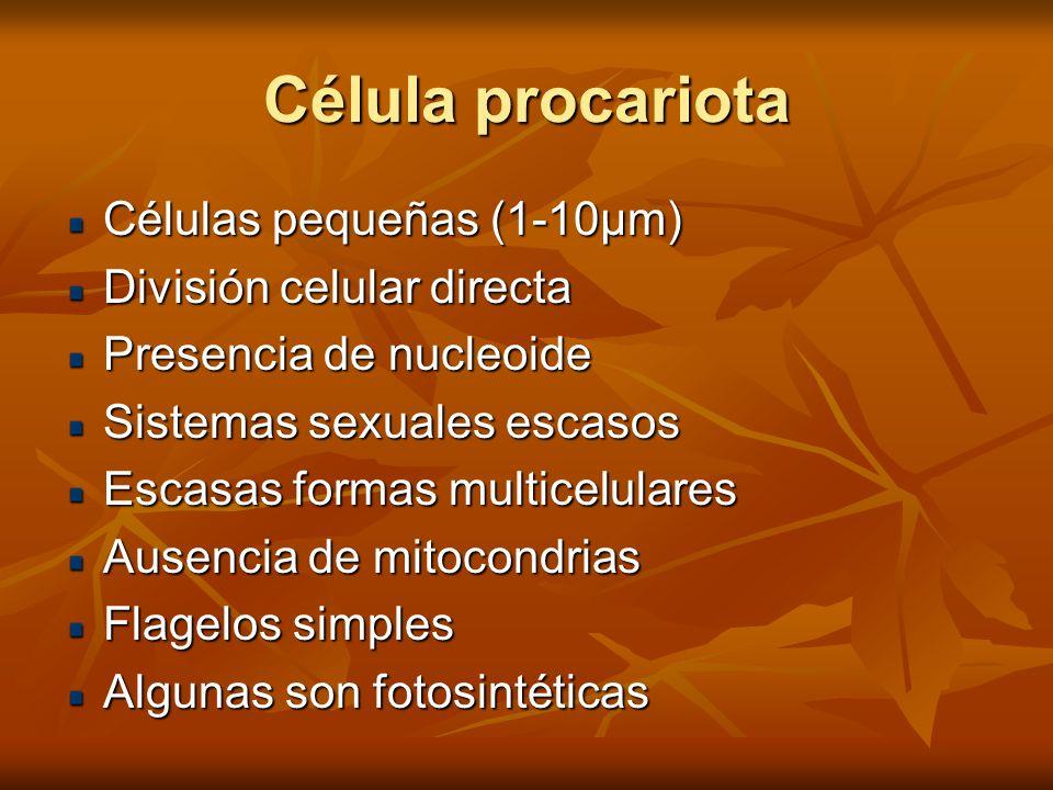 Célula procariota Células pequeñas (1-10µm) División celular directa Presencia de nucleoide Sistemas sexuales escasos Escasas formas multicelulares Au