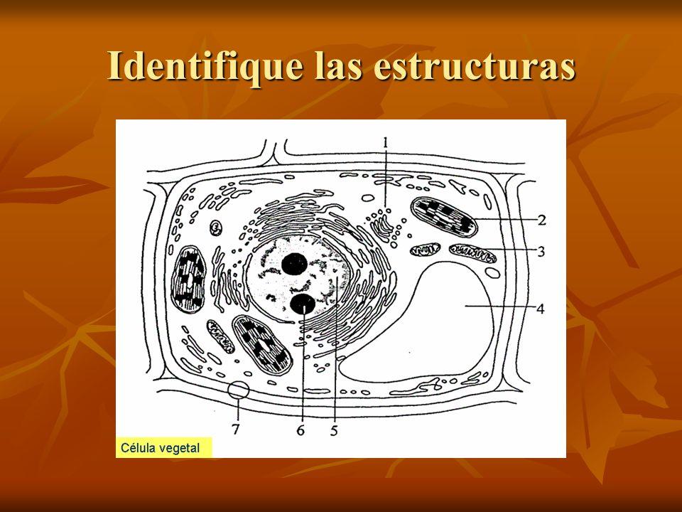 Identifique las estructuras