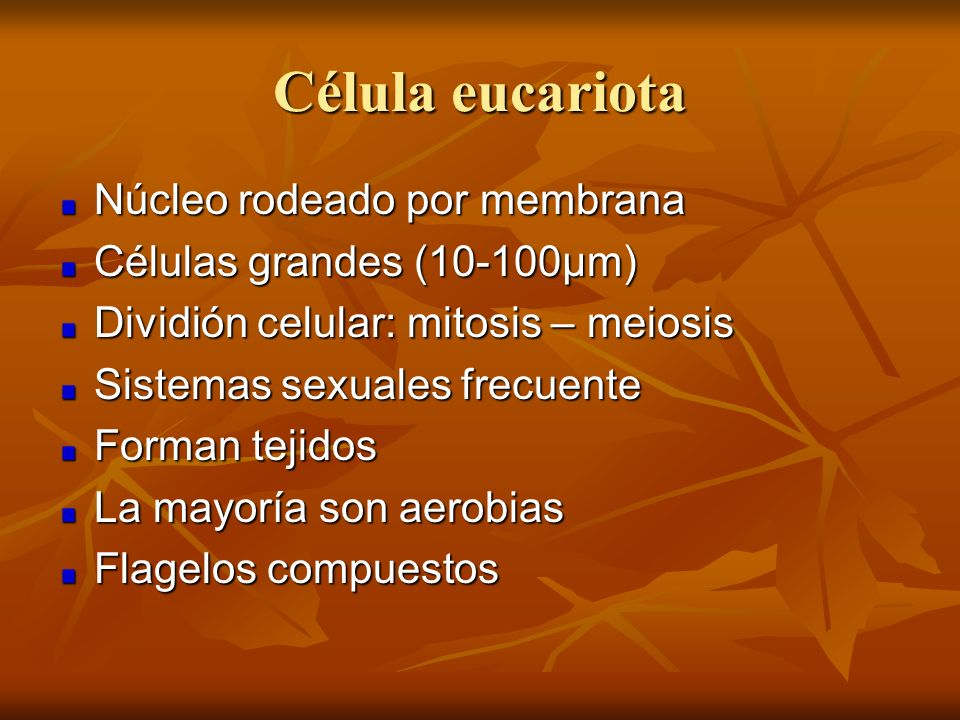Célula eucariota Núcleo rodeado por membrana Células grandes (10-100µm) Dividión celular: mitosis – meiosis Sistemas sexuales frecuente Forman tejidos
