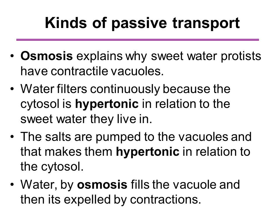 Osmosis explains why sweet water protists have contractile vacuoles. Water filters continuously because the cytosol is hypertonic in relation to the s