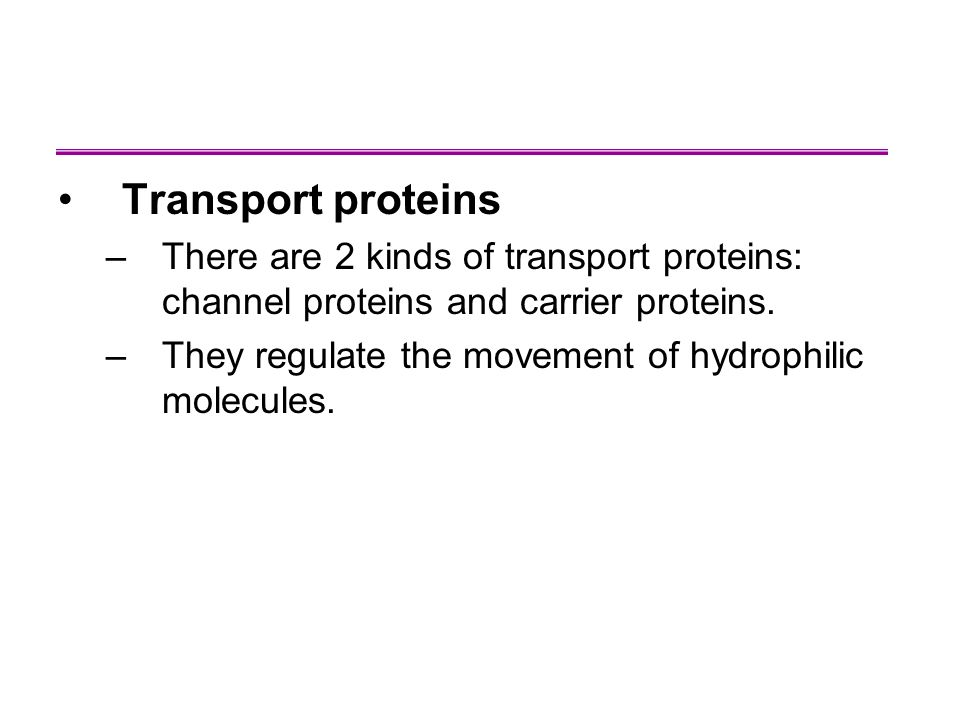 Transport proteins –There are 2 kinds of transport proteins: channel proteins and carrier proteins.