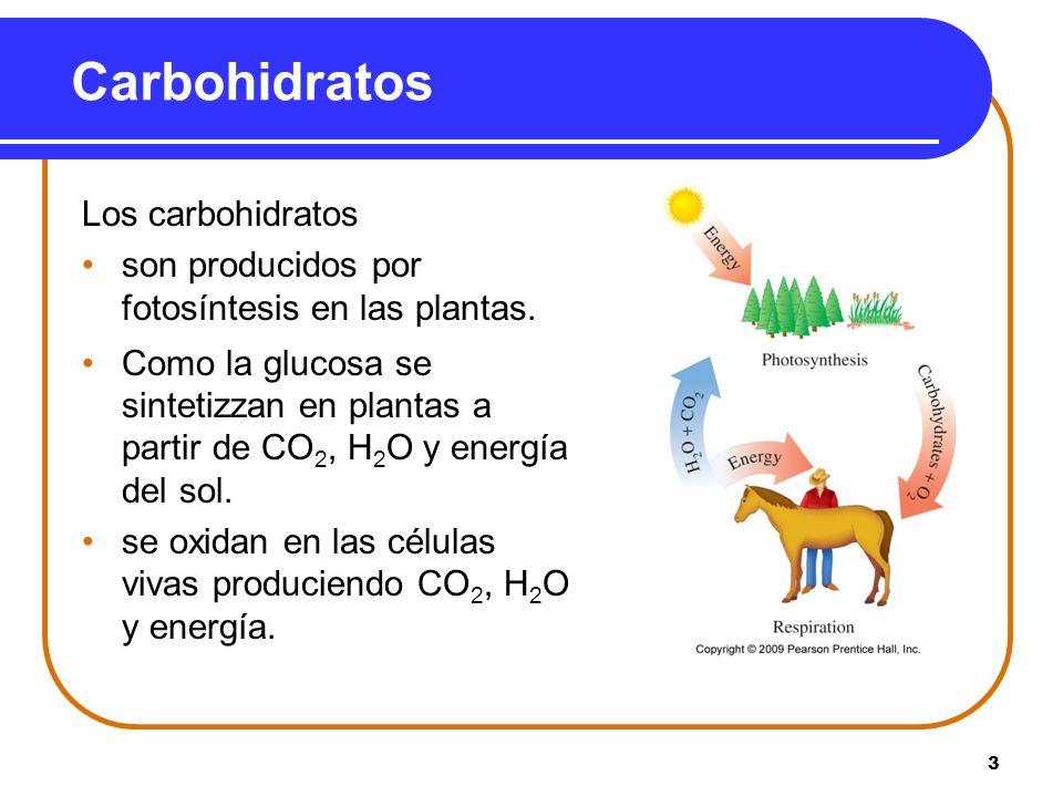 3 Carbohidratos Los carbohidratos son producidos por fotosíntesis en las plantas. Como la glucosa se sintetizzan en plantas a partir de CO 2, H 2 O y