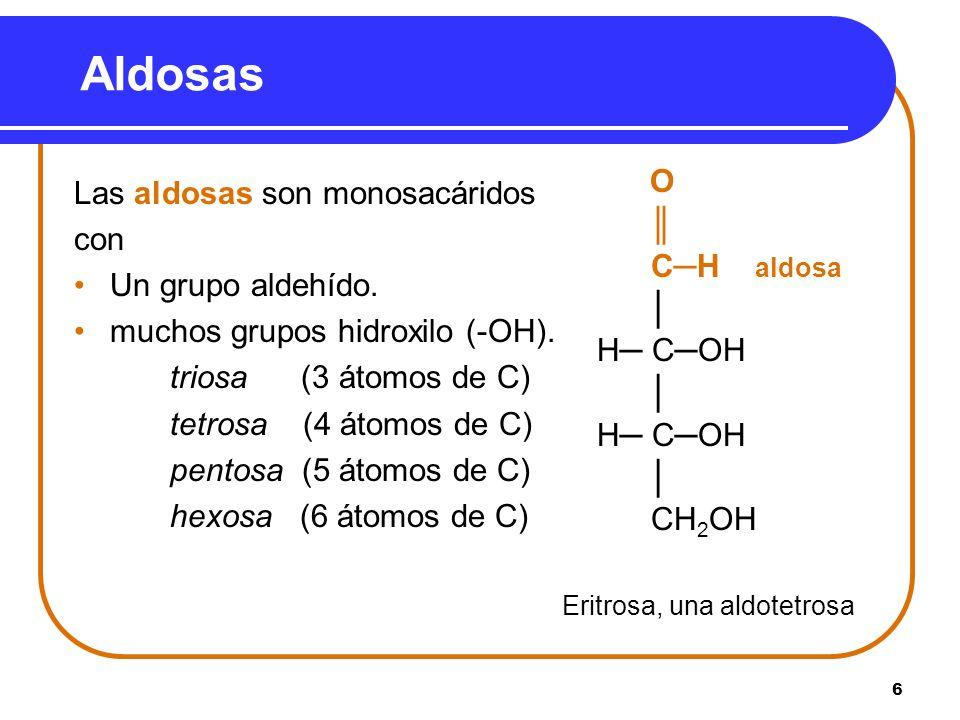 6 Aldosas Las aldosas son monosacáridos con Un grupo aldehído. muchos grupos hidroxilo (-OH). triosa (3 átomos de C) tetrosa (4 átomos de C) pentosa (
