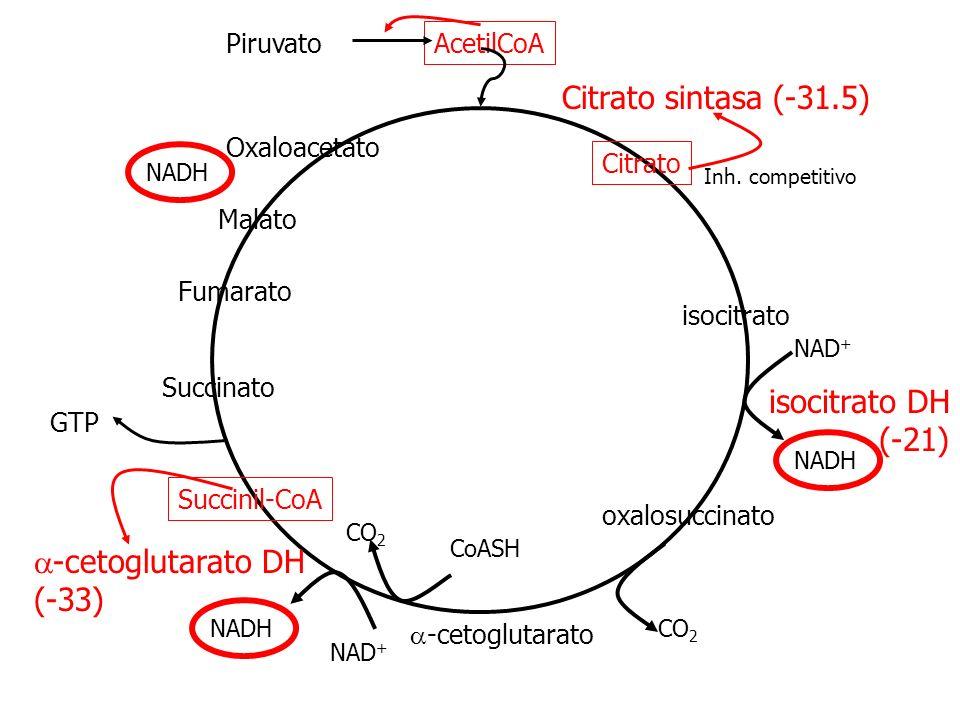 Citrato isocitrato -cetoglutarato Succinil-CoA Succinato Malato Fumarato Oxaloacetato Piruvato AcetilCoA Citrato sintasa (-31.5) isocitrato DH (-21) N