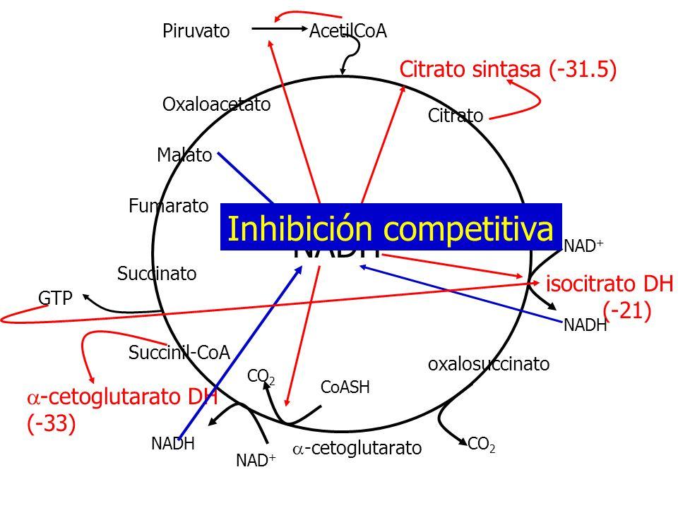 Citrato isocitrato -cetoglutarato Succinil-CoA Succinato Malato Fumarato Oxaloacetato PiruvatoAcetilCoA Citrato sintasa (-31.5) isocitrato DH (-21) NA