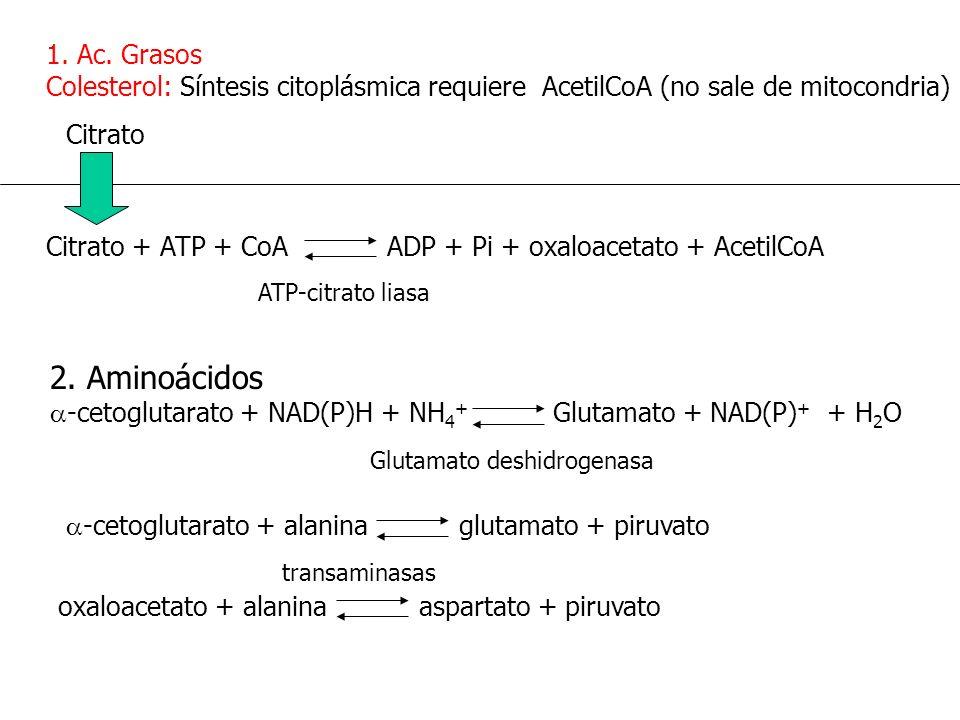 1. Ac. Grasos Colesterol: Síntesis citoplásmica requiere AcetilCoA (no sale de mitocondria) Citrato + ATP + CoA ADP + Pi + oxaloacetato + AcetilCoA Ci