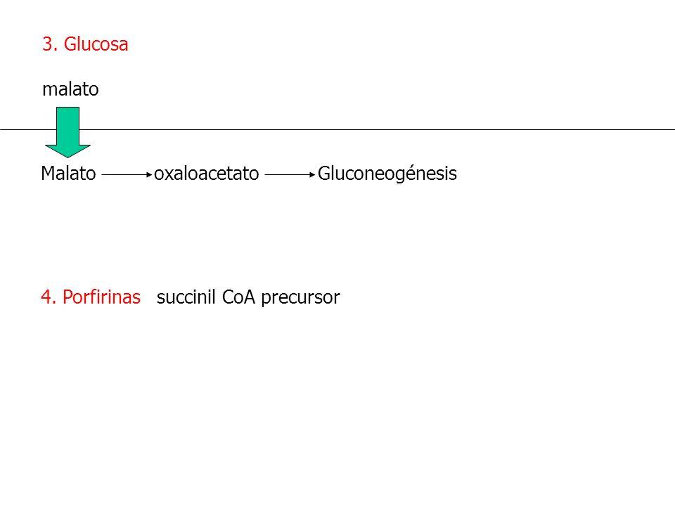 4. Porfirinas succinil CoA precursor 3. Glucosa malato Malato oxaloacetato Gluconeogénesis