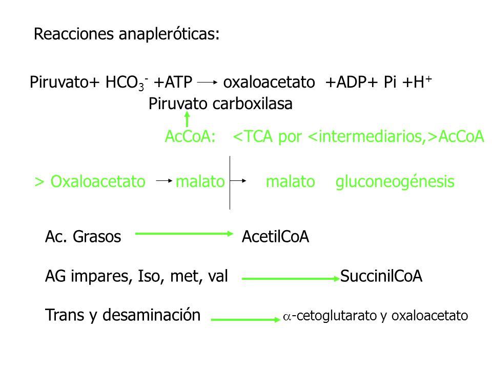 Reacciones anapleróticas: Piruvato+ HCO 3 - +ATP oxaloacetato +ADP+ Pi +H + Piruvato carboxilasa AcCoA: AcCoA > Oxaloacetato malato malato gluconeogén