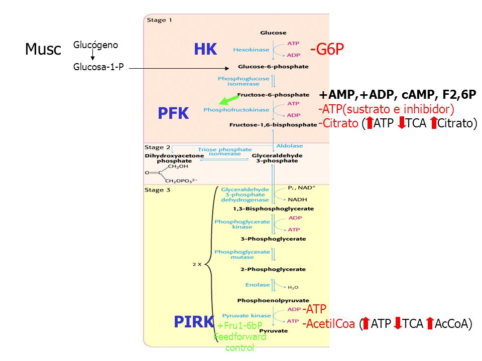 En levadura: Coenzima: Tiaminapirofosfato TPP: descarboxilaciones De -cetoácidos LADH