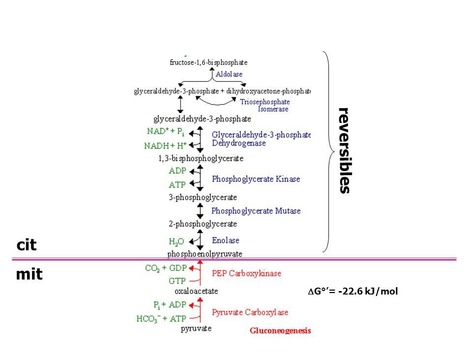 malato Malato DH (inversa entrada NADH) NADH NAD + malato Malato DH NADHNAD + Oxaloacetato aspartato Asp aminotransferasa aspartato Asp aminotransfera