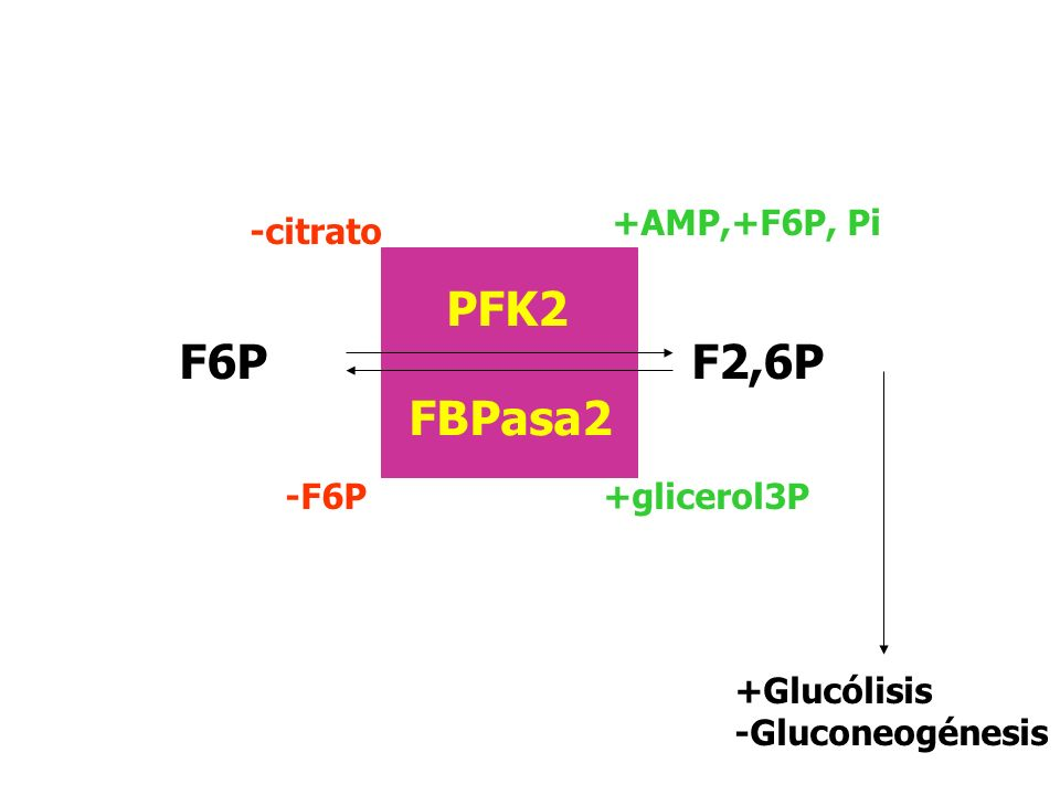 Regulación por F2,6P +F2,6P -F2,6P