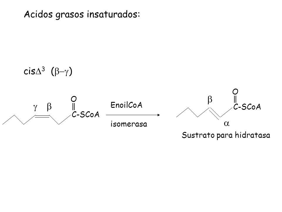 Acidos grasos insaturados: cis 3 ( ) C-SCoA O EnoilCoA isomerasa C-SCoA O Sustrato para hidratasa