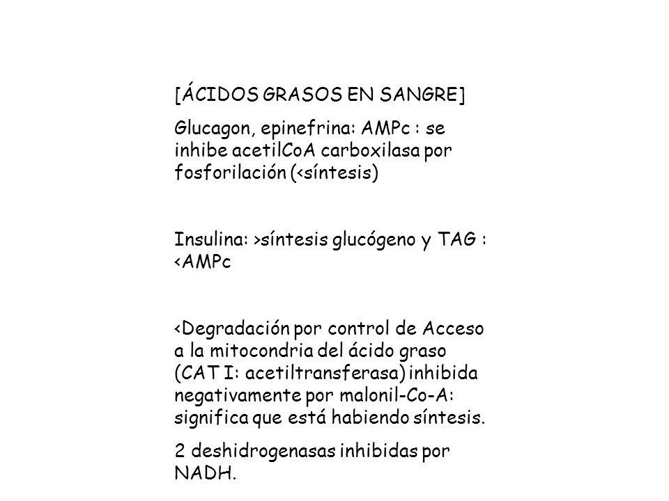Glucagon, epinefrina: AMPc : se inhibe acetilCoA carboxilasa por fosforilación (<síntesis) Insulina: >síntesis glucógeno y TAG : <AMPc <Degradación por control de Acceso a la mitocondria del ácido graso (CAT I: acetiltransferasa) inhibida negativamente por malonil-Co-A: significa que está habiendo síntesis.