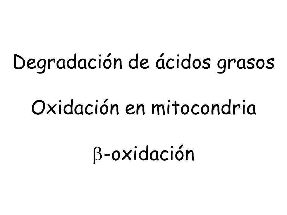 Degradación de ácidos grasos Oxidación en mitocondria -oxidación