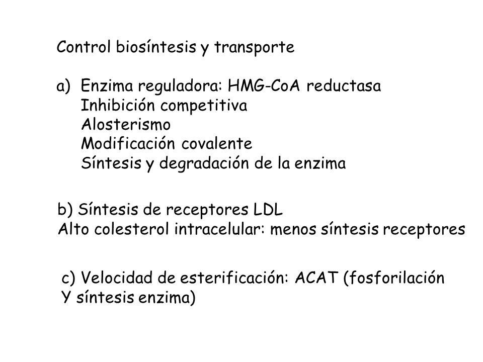 Control biosíntesis y transporte a)Enzima reguladora: HMG-CoA reductasa Inhibición competitiva Alosterismo Modificación covalente Síntesis y degradaci