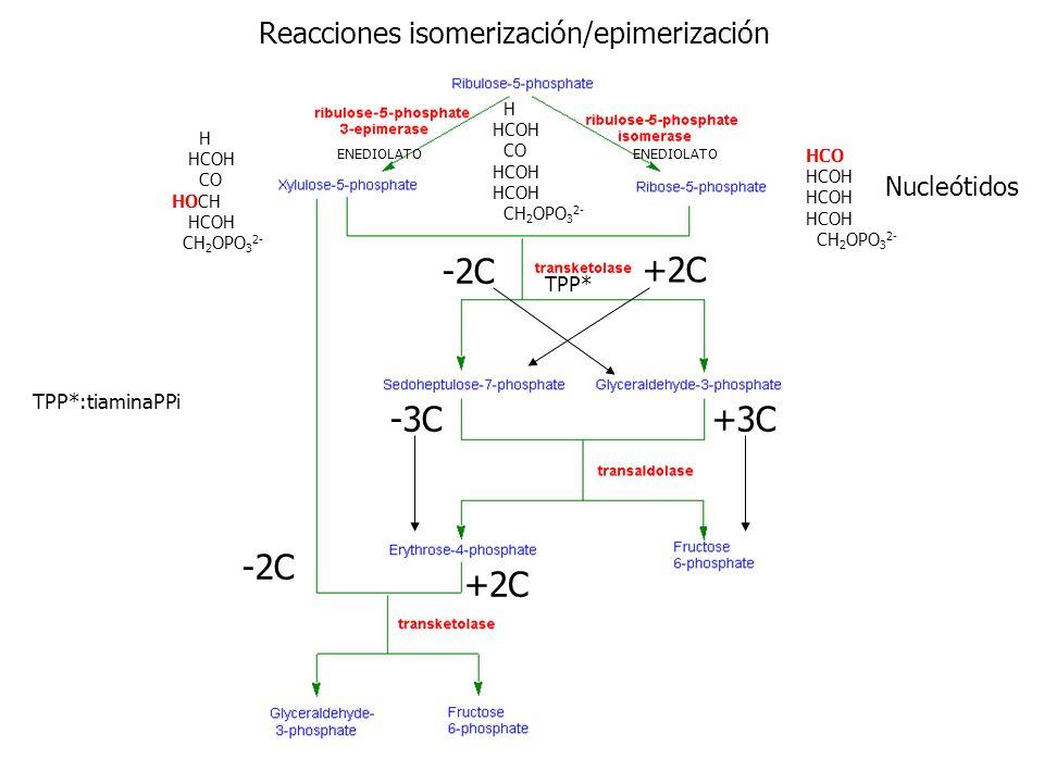 Reacciones isomerización/epimerización H HCOH CO HCOH CH 2 OPO 3 2- H HCOH CO HOCH HCOH CH 2 OPO 3 2- HCO HCOH CH 2 OPO 3 2- ENEDIOLATO Nucleótidos -2