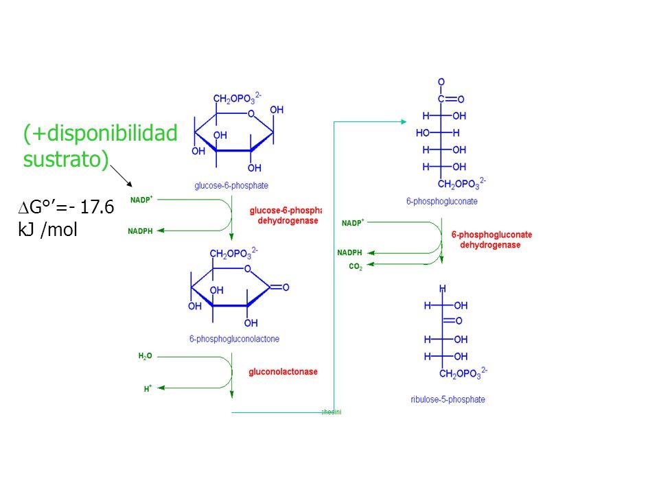 G°=- 17.6 kJ /mol (+disponibilidad sustrato)