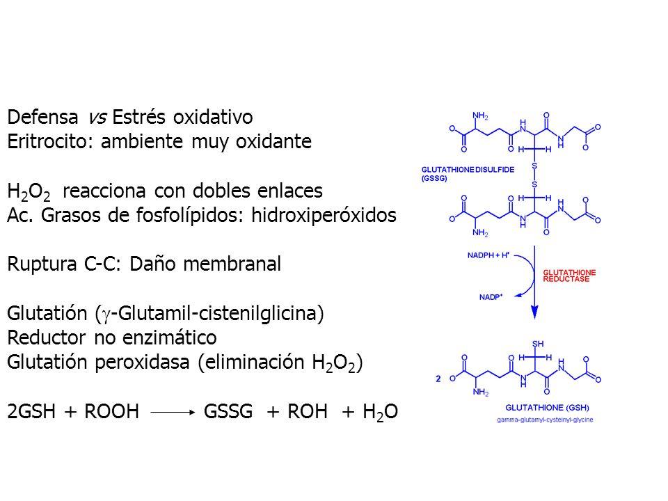 Defensa vs Estrés oxidativo Eritrocito: ambiente muy oxidante H 2 O 2 reacciona con dobles enlaces Ac. Grasos de fosfolípidos: hidroxiperóxidos Ruptur