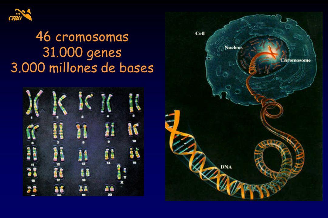 46 cromosomas 31.000 genes 3.000 millones de bases