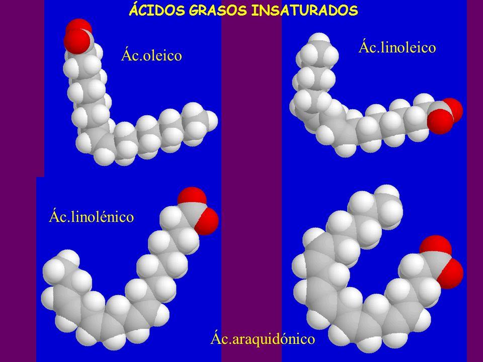 Ác.oleico Ác.linoleico Ác.linolénico Ác.araquidónico ÁCIDOS GRASOS INSATURADOS