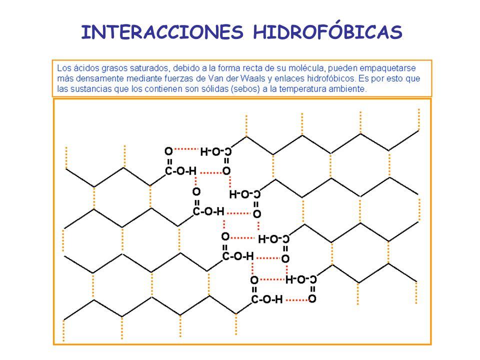 INTERACCIONES HIDROFÓBICAS