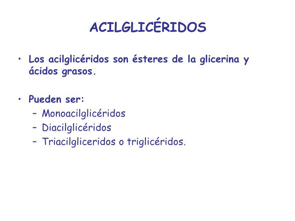 ACILGLICÉRIDOS Los acilglicéridos son ésteres de la glicerina y ácidos grasos. Pueden ser: –Monoacilglicéridos –Diacilglicéridos –Triacilgliceridos o