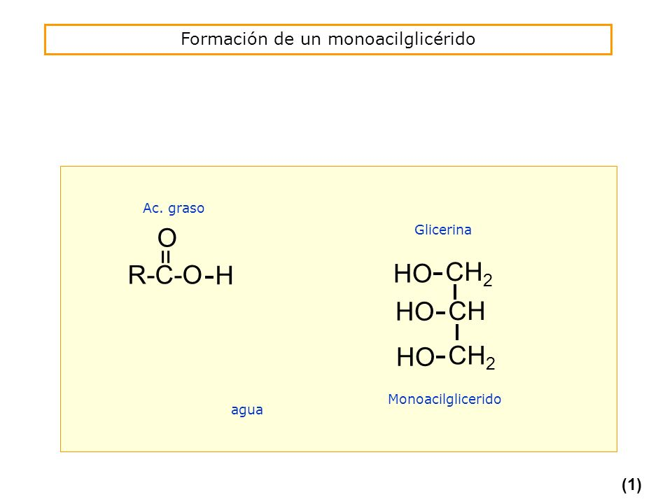Formación de un monoacilglicérido R-C-O = O H HO Monoacilglicerido agua CH 2 CH HO CH 2 HO Glicerina Ac. graso (1)
