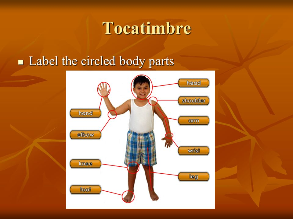 Tocatimbre Label the circled body parts Label the circled body parts