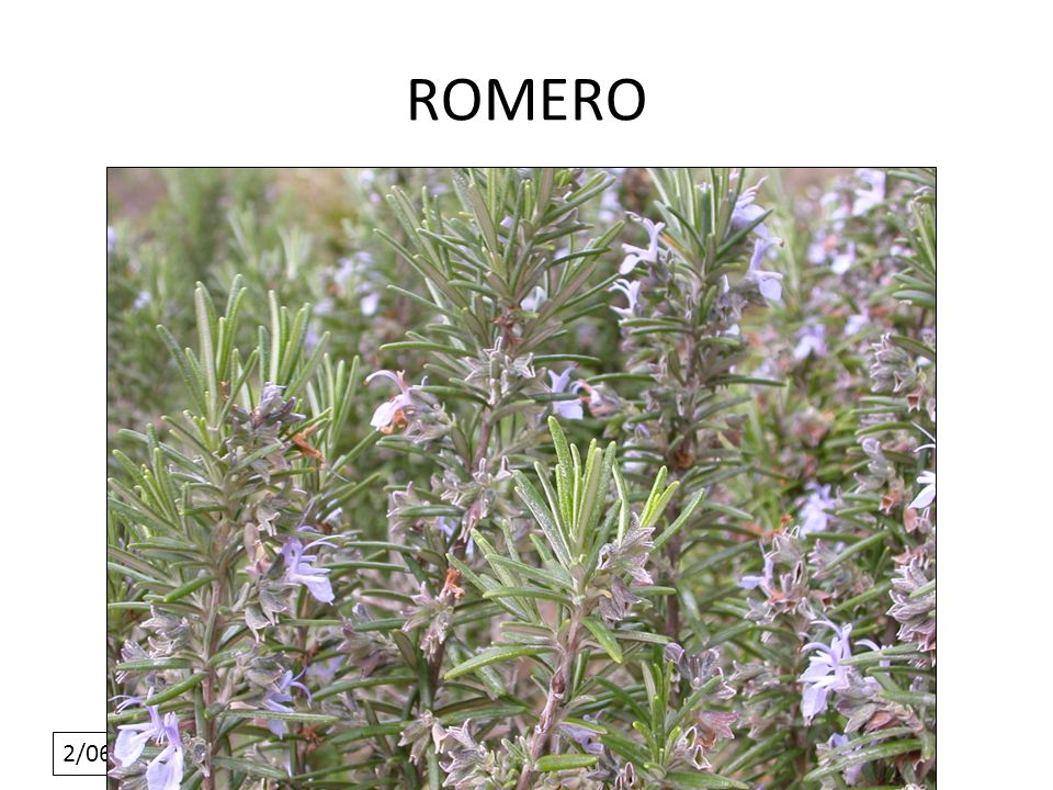 2/06/10 ROMERO