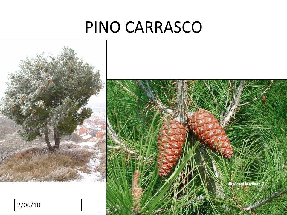2/06/10 PINO CARRASCO