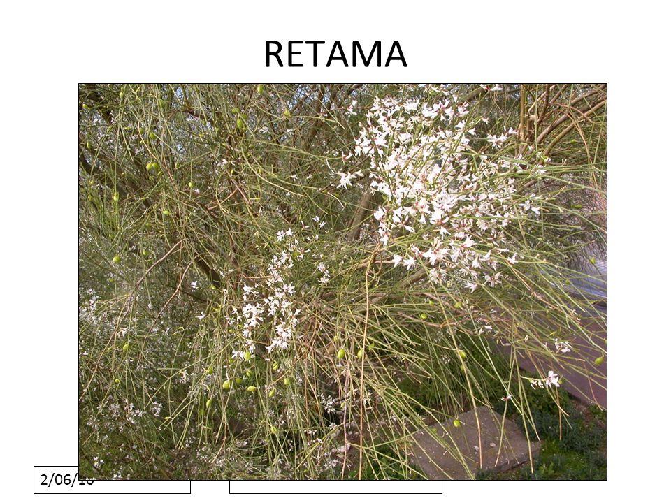 2/06/10 RETAMA