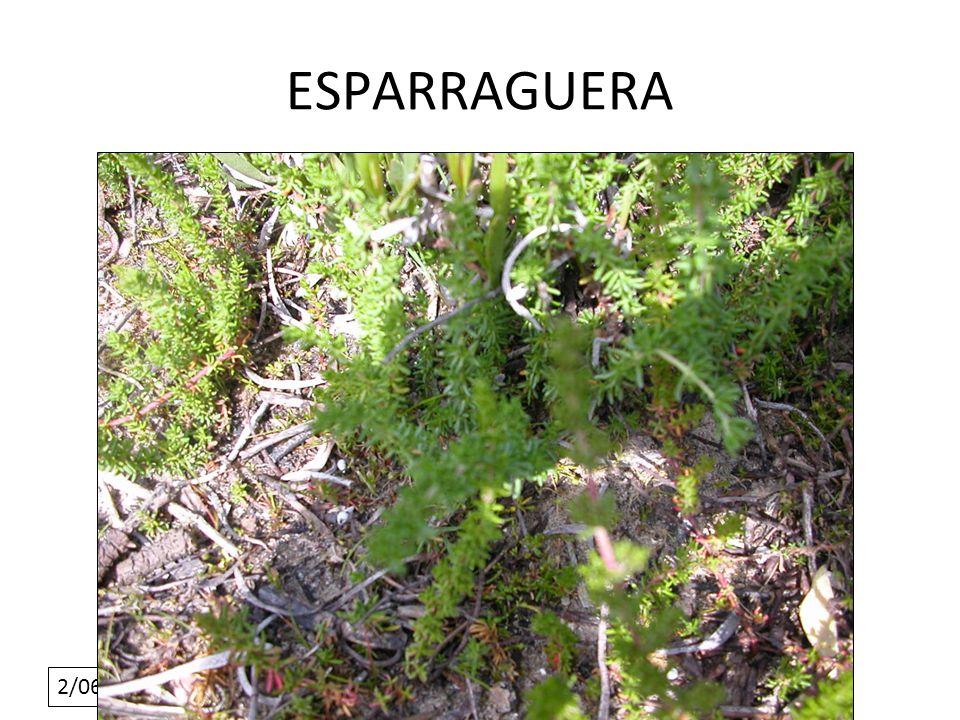2/06/10 ESPARRAGUERA