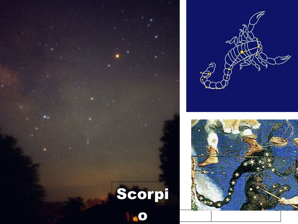 2/06/10 Scorpi o