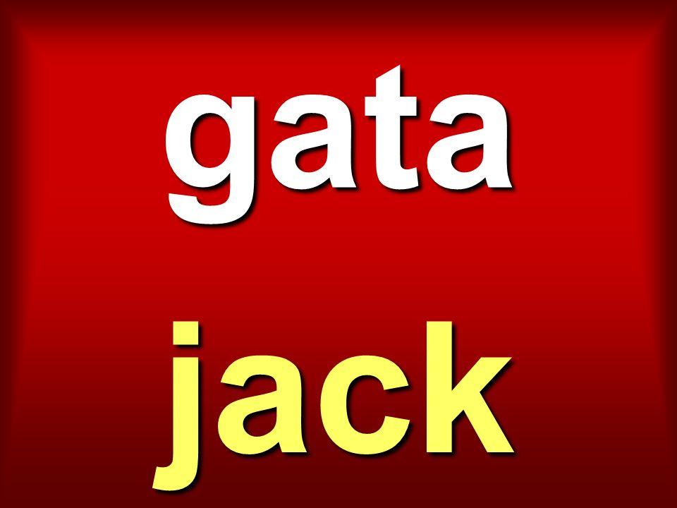 gata jack