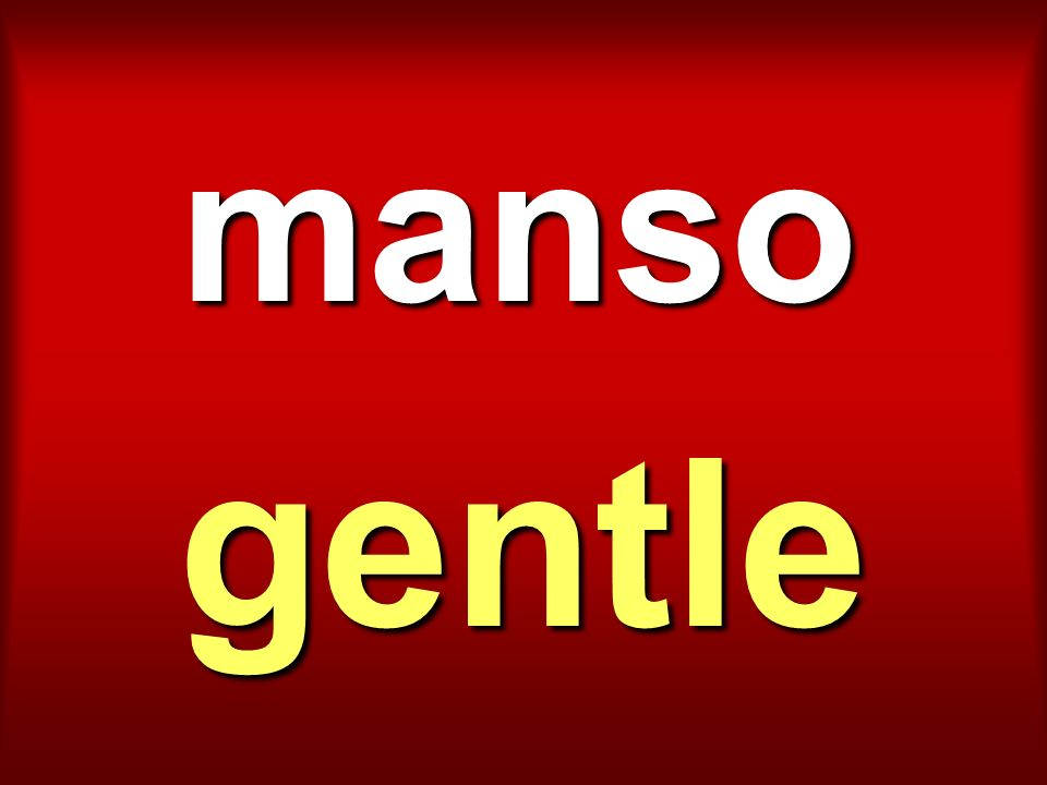 manso gentle