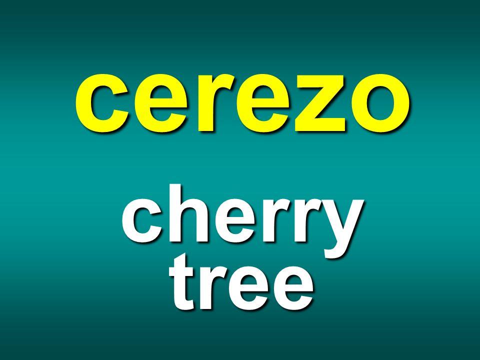 cerezo cherry tree