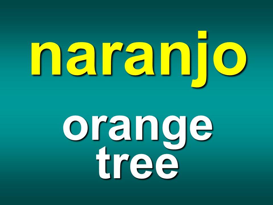 naranjo orange tree