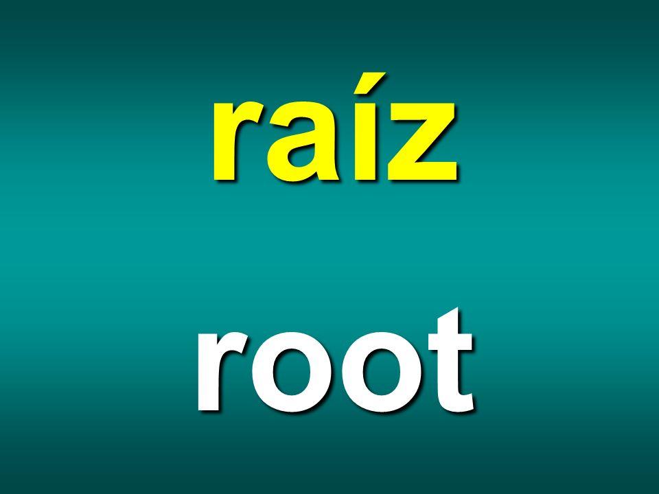 raíz root
