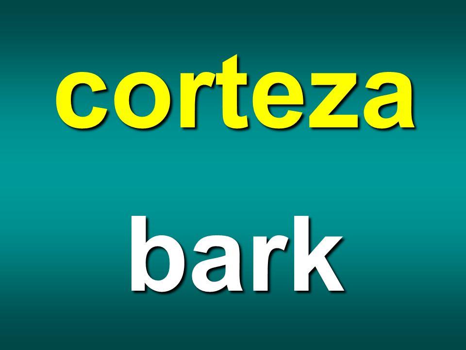 corteza bark