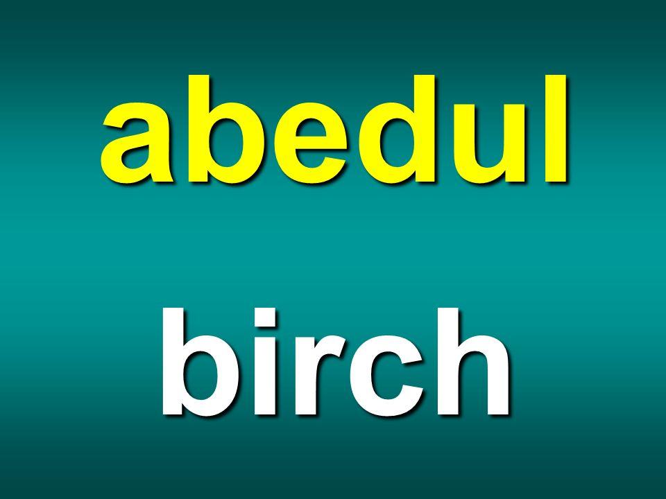 abedul birch