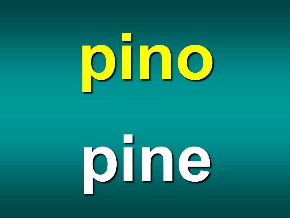 pino pine