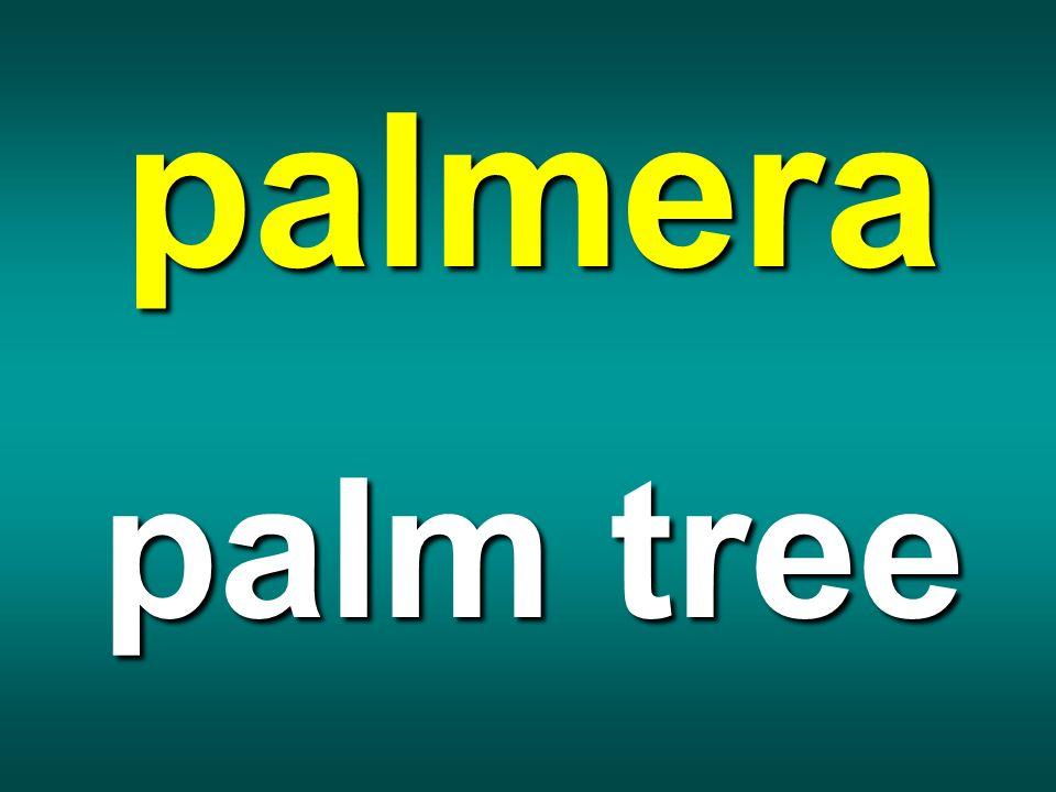 palmera palm tree