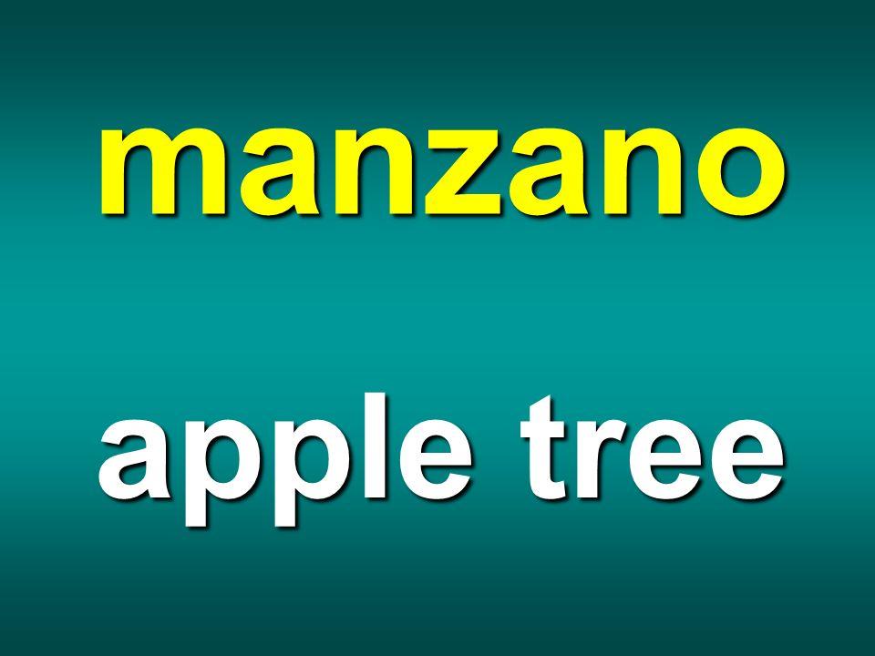 manzano apple tree