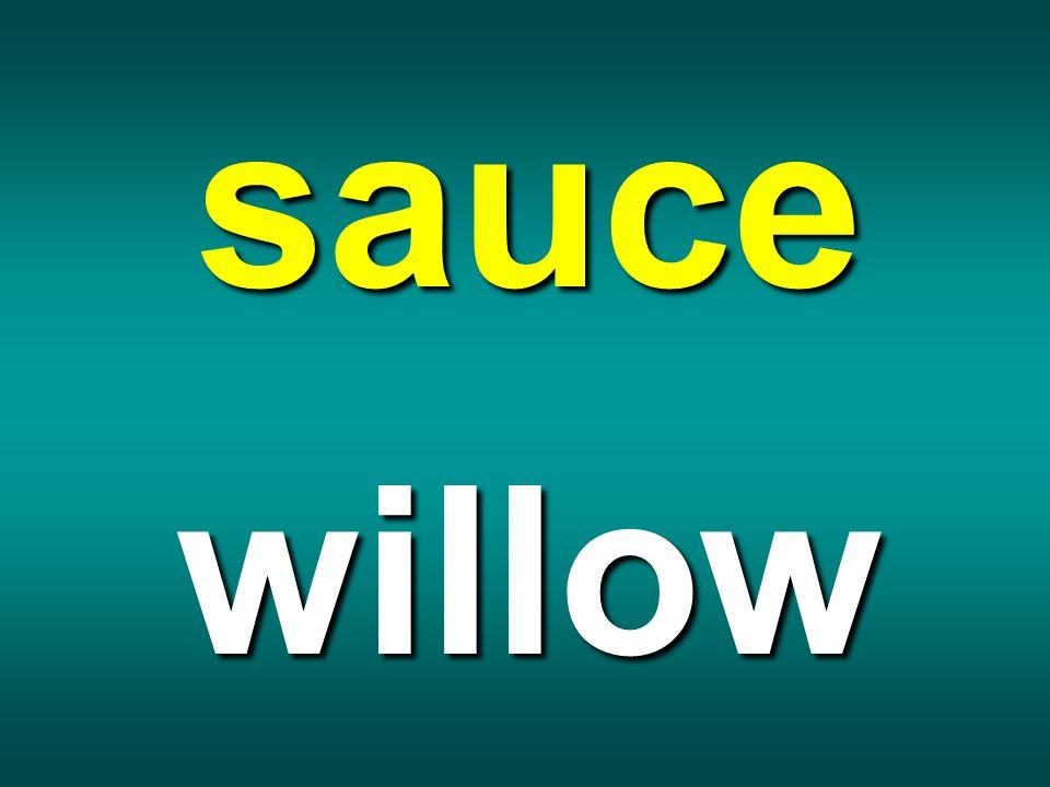 sauce willow