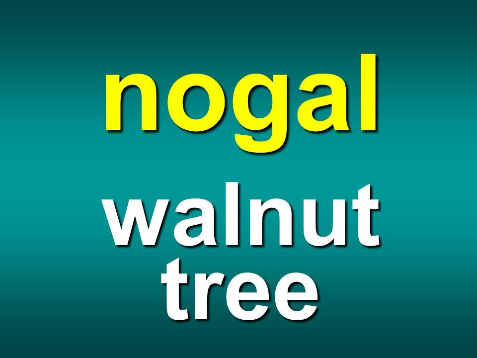 nogal walnut tree
