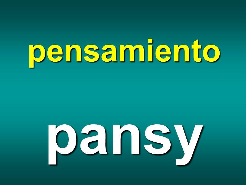 pensamiento pansy