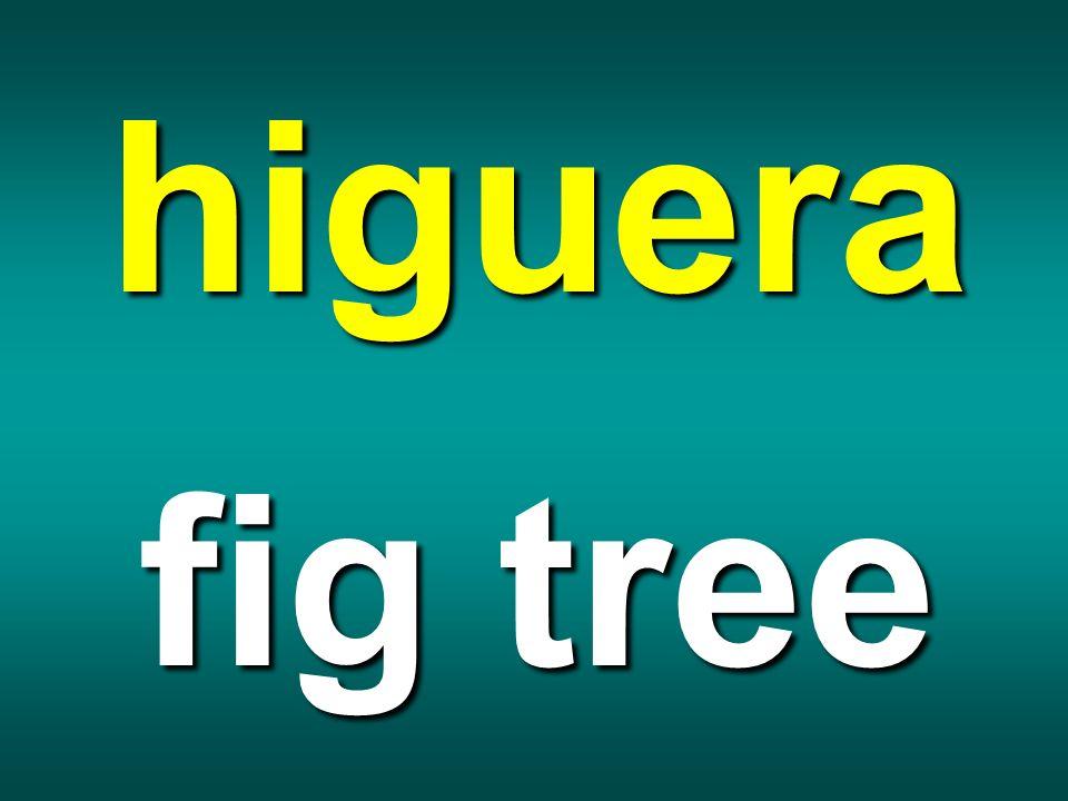 higuera fig tree